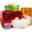 Stock Photo: White rabbits with gifts