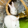 Rabbits in basket — Stock Photo