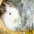 Rabbit in basket — Stock Photo #4101570