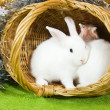 White rabbits in basket — Stock Photo #4101574