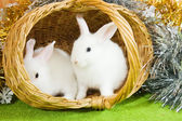 White rabbits in basket — Stock Photo
