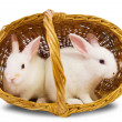White rabbits in basket — Stock Photo #4113273
