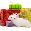 Rabbits with gifts — Stock Photo #4612388