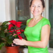 Mature woman with Poinsettia flowers — Stock Photo #4614972