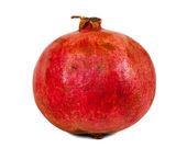 One pomegranate — Stock Photo