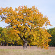 Autumn landscape with oak — Stock Photo #4620408