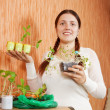 Stock Photo: Gardener with various seedlings