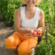 Woman picking tomato — Stock Photo