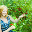 Teen girl  currant in the field — Stock Photo