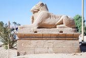 Memória Ram-cabeça esfinges no templo de karnak — Fotografia Stock