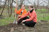ženy, které pracují s lopatou v sadech — Stock fotografie