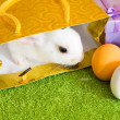 Royalty-Free Stock Photo: Easter rabbit  with eggs