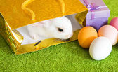 Easter rabbit with eggs — Stock Photo