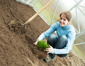 Woman resetting sprouts — Stock Photo