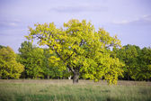 Un albero meraviglioso primavera — Foto Stock