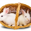 Stock Photo: Two white rabbits in basket