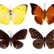 Set of exotic butterfly — Stock Photo