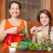 Happy women with seedlings — Stock Photo #5152566
