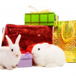 Two rabbits with gifts — Stock Photo
