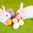 Easter rabbits  with eggs — Stock Photo