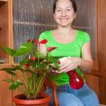 anthurium çiçekli tencerede kadınla — Stok fotoğraf