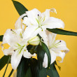 Bouquet of white lily — Stock Photo
