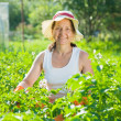 Woman  in plant of potato — Stock Photo