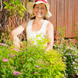 Woman doing work in her garden - Stock Photo