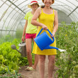 Women watering vegetables — Stock Photo