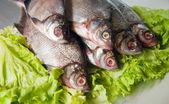 Fresh-water fish — Stock Photo