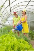 Women watering vegetables — Stock Photo