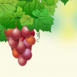 Abstract background from a vine — Stok fotoğraf