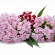 Bouquet from sweet-williams — Stock Photo