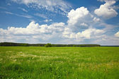 Tree in the green field on the background of blue sky — Stock Photo