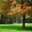Sumptuous tree — Stock Photo #3810910