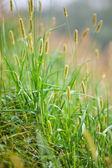 Zielona trawa w słoneczny dzień — Zdjęcie stockowe
