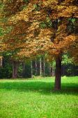 Sumptuous tree — Stock Photo