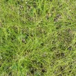 Texture of green grass — Stock Photo