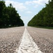 Clear new road through wood — Stock Photo