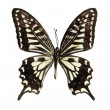 Butterfly on the white — Stock Photo