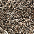 Stock Photo: Texture anthill in sunny day