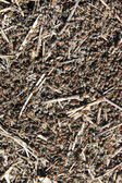 Texture anthill in sunny day — Stock Photo