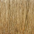 Texture of old dry sedge — Stock Photo #3150411