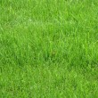 Stock Photo: Texture green young grass