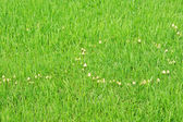 Texture green young grass — Stock Photo