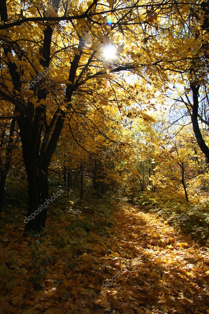 Autumn forest, sunny day  Stock Photo #3913504