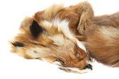 Fox fur — Stock Photo
