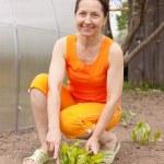 kvinnan gör ett arbete i hennes trädgård — Stockfoto