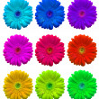 Multicolored Flowers — Stock Photo #3177395