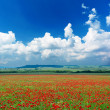 Deep blue sky and poppy meadow - Stock Photo